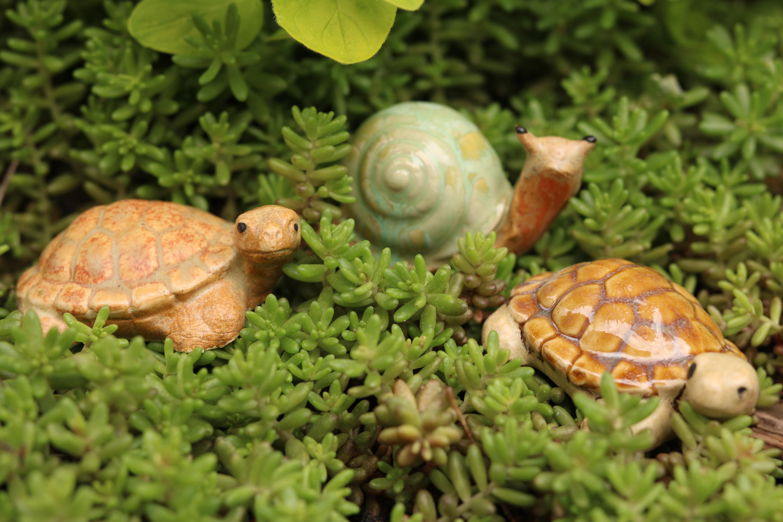 Schildkröte steingrau/ M 7cm