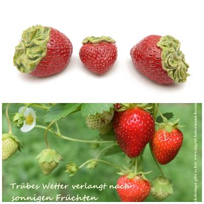 Erdbeeren- Trio mit Spruchpostkarte / S 4 cm