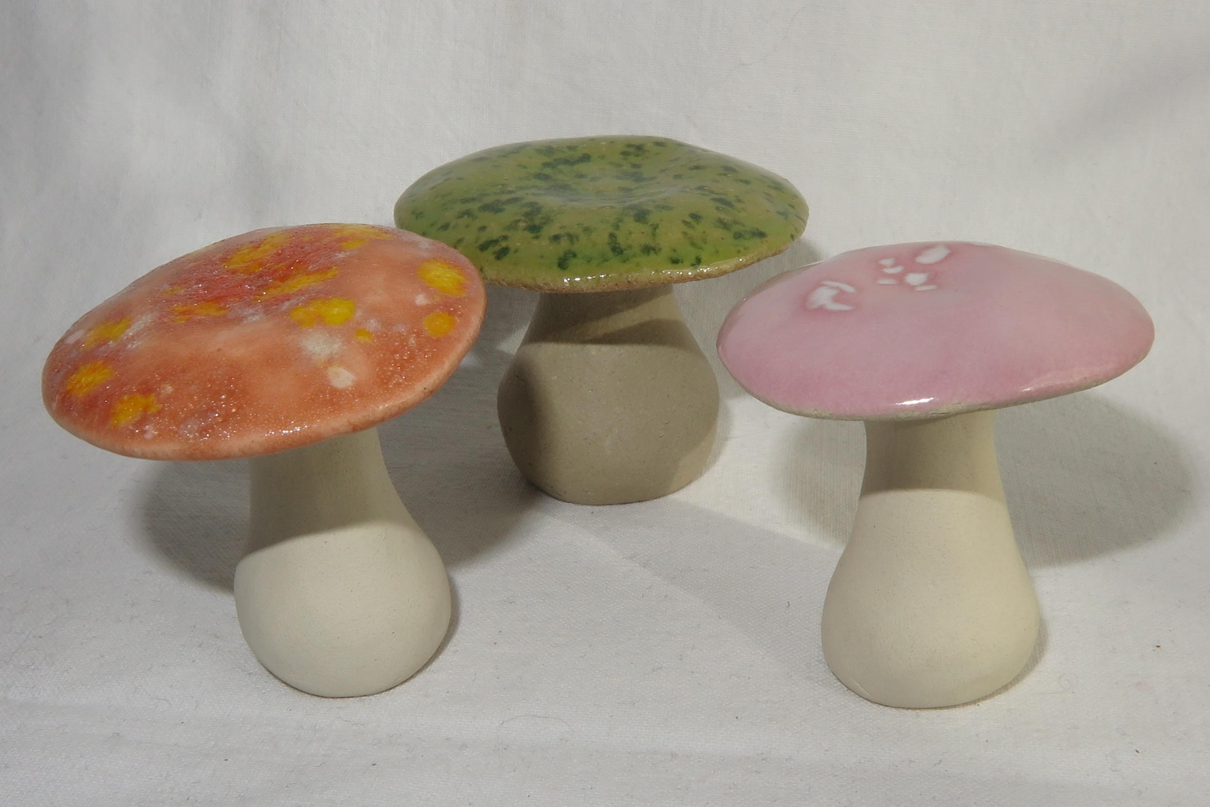 3 Pilze frisch und farbenfroh